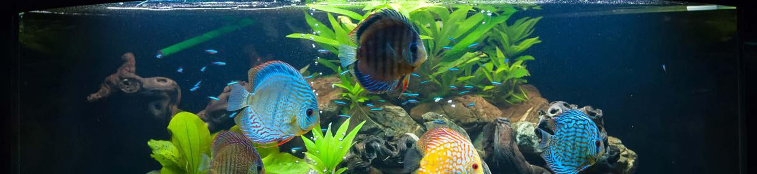 Ihr aquaristik shop f r aquarium zubeh r dehner for Aquaristik shop