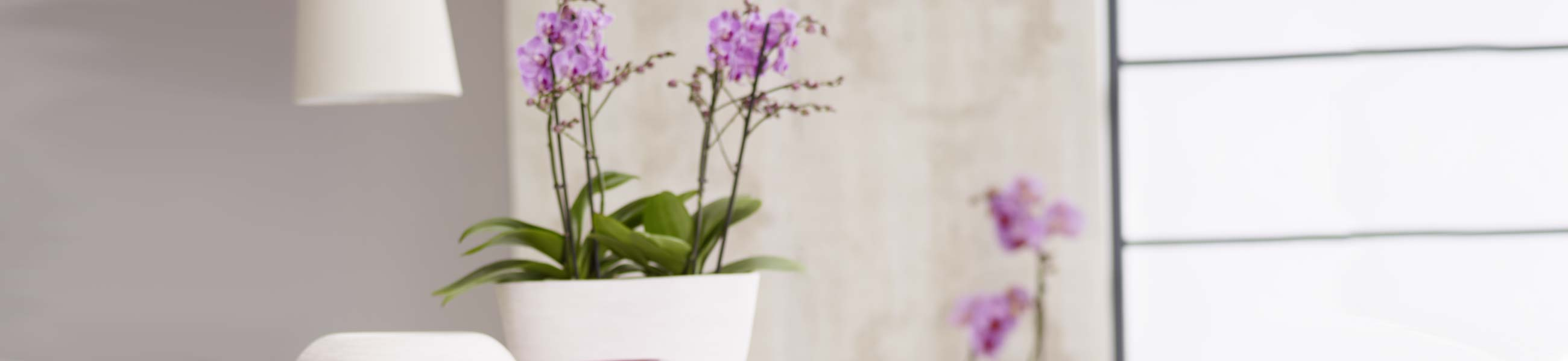 orchideentopf f r ihre bl hfreunde bei dehner bestellen dehner. Black Bedroom Furniture Sets. Home Design Ideas