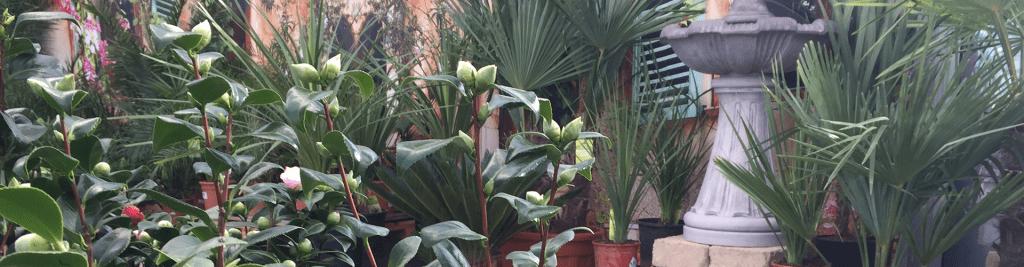 Beetpflanzen Balkonpflanzen Sommer Dehner Verkäufer