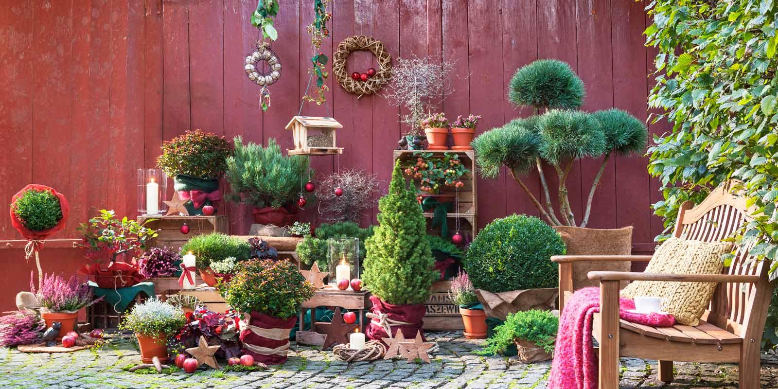 dehner ihr online shop f r garten pflanzen balkon tiere On winterschutz pflanzen balkon