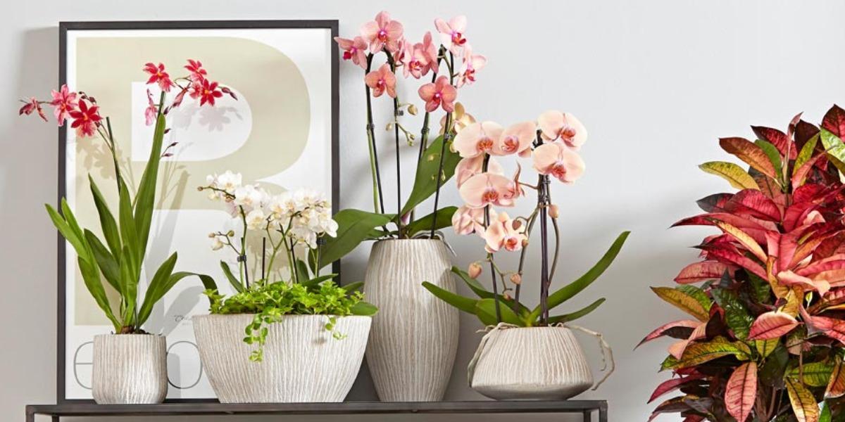 wundersch ne orchideen dehner