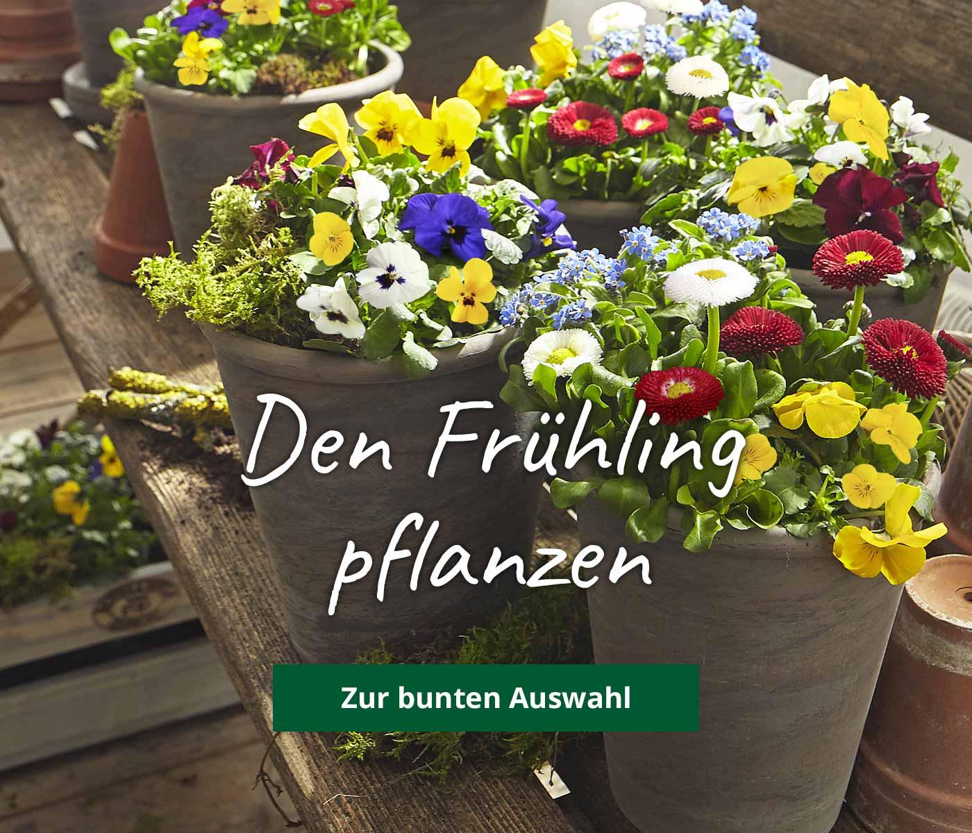 Blumensamen Von Dehner Da Bluht Ihr Zuhause Auf Dehner