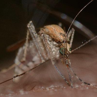 lampen gegen mücken media markt