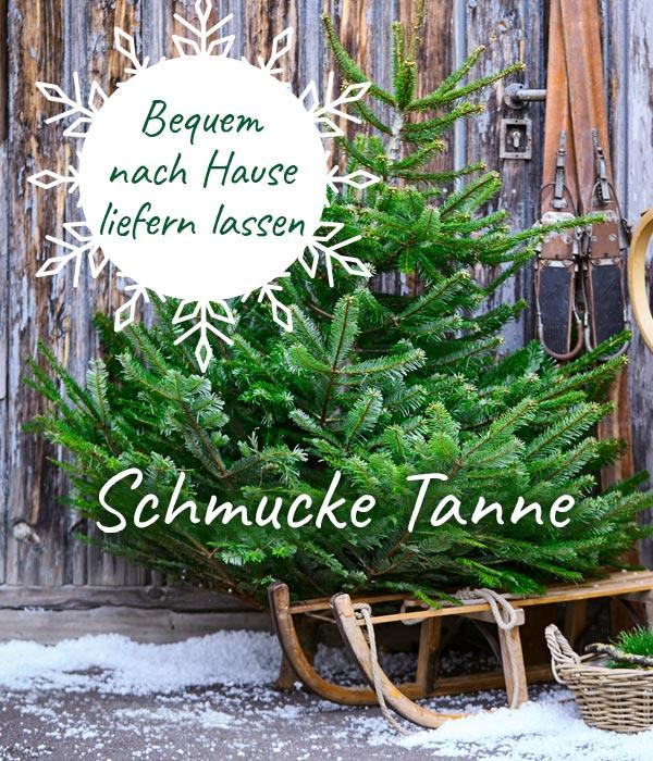 Echte Tannenbaum Kaufen.Weihnachtsbaum Bequem Online Kaufen Dehner